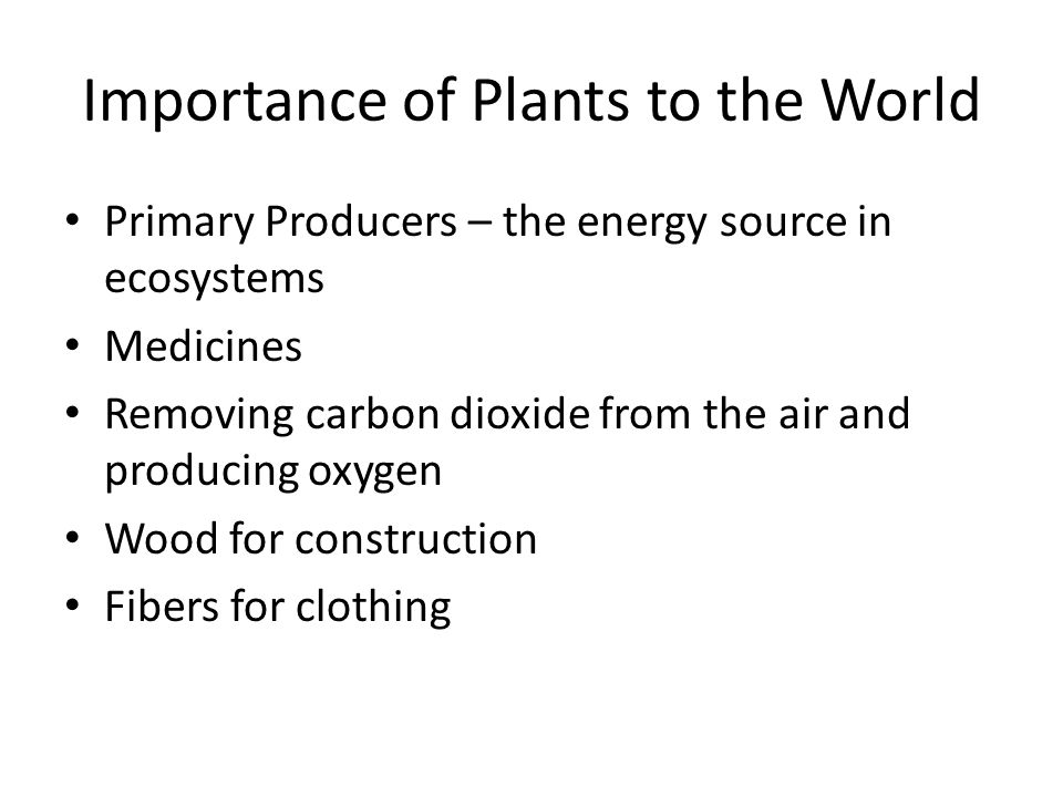 Importance of Plants to the World Primary Producers – the energy source in ecosystems Medicines Removing carbon dioxide from the air and producing oxygen Wood for construction Fibers for clothing