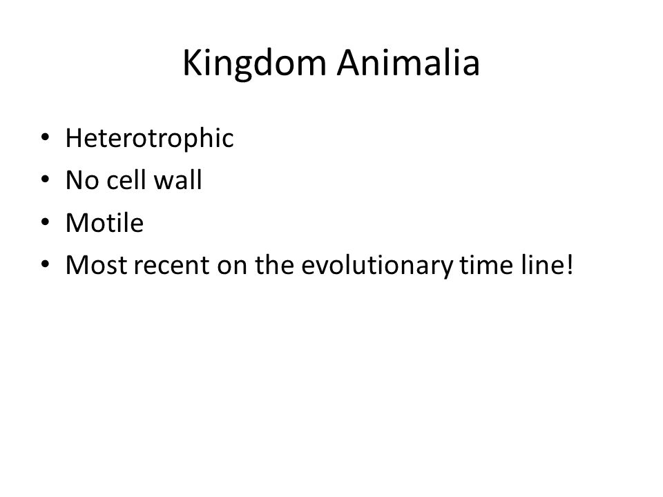 Heterotrophic No cell wall Motile Most recent on the evolutionary time line!