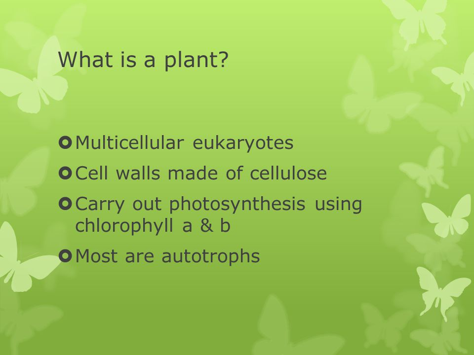 What is a plant.