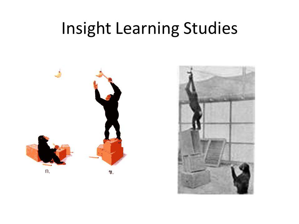 insight learning psychology