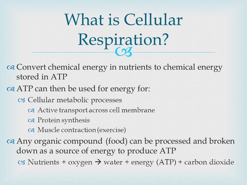   Convert chemical energy in nutrients to chemical energy stored in ATP  ATP can then be used for energy for:  Cellular metabolic processes  Active transport across cell membrane  Protein synthesis  Muscle contraction (exercise)  Any organic compound (food) can be processed and broken down as a source of energy to produce ATP  Nutrients + oxygen  water + energy (ATP) + carbon dioxide What is Cellular Respiration