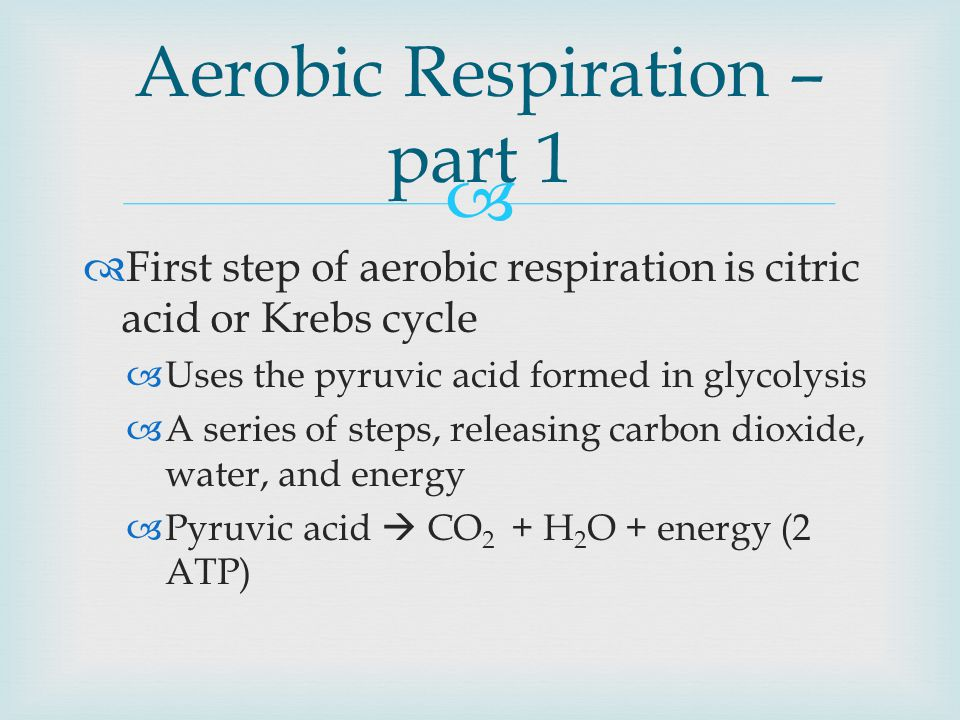   First step of aerobic respiration is citric acid or Krebs cycle  Uses the pyruvic acid formed in glycolysis  A series of steps, releasing carbon dioxide, water, and energy  Pyruvic acid  CO 2 + H 2 O + energy (2 ATP) Aerobic Respiration – part 1