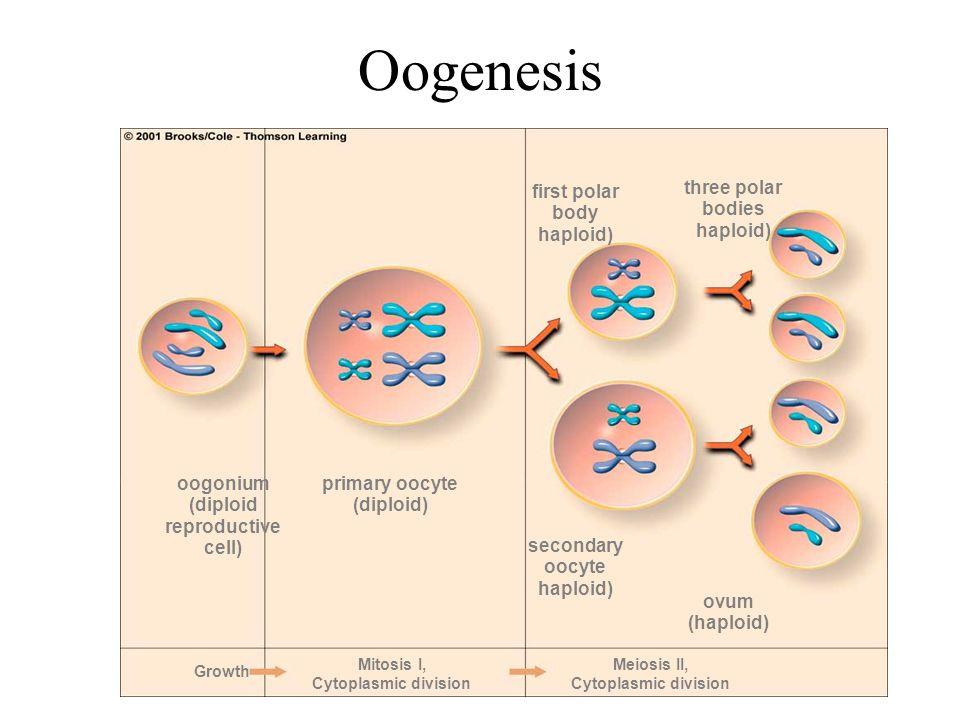 Cytoplasmic division Cytoplasm Diagram