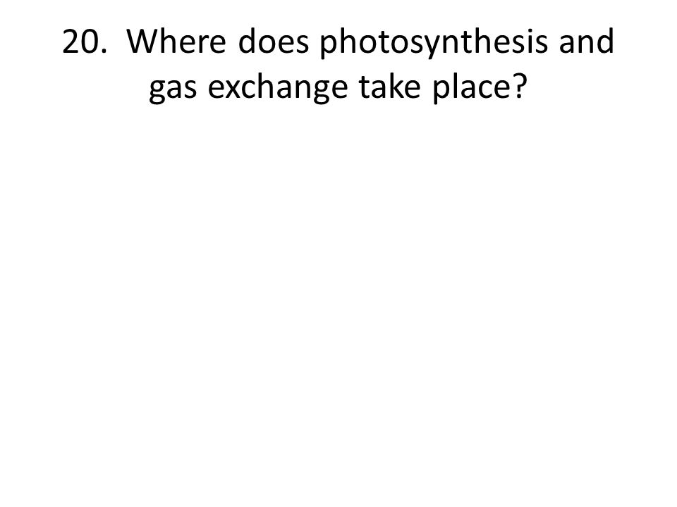 20. Where does photosynthesis and gas exchange take place