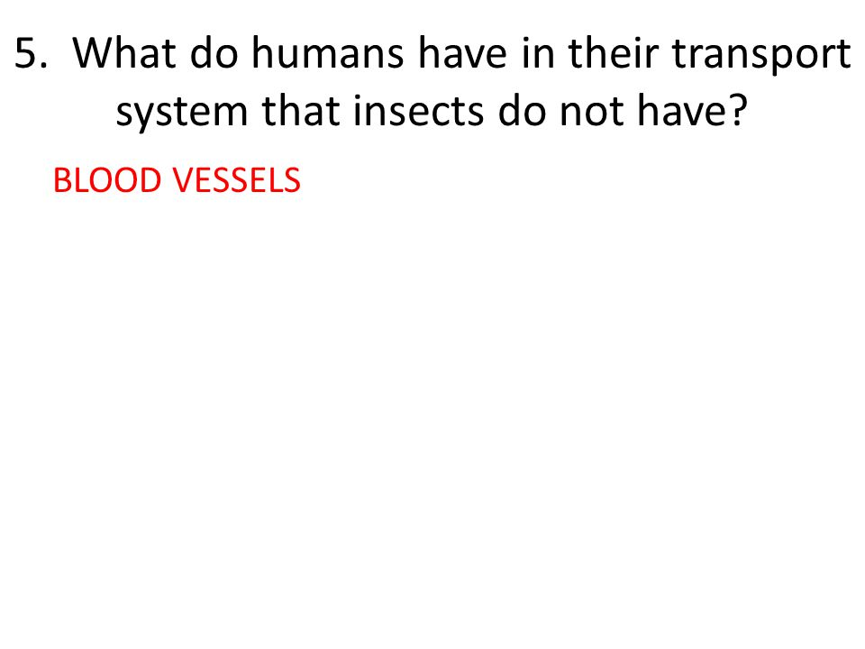 5. What do humans have in their transport system that insects do not have BLOOD VESSELS