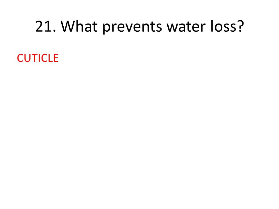 21. What prevents water loss CUTICLE