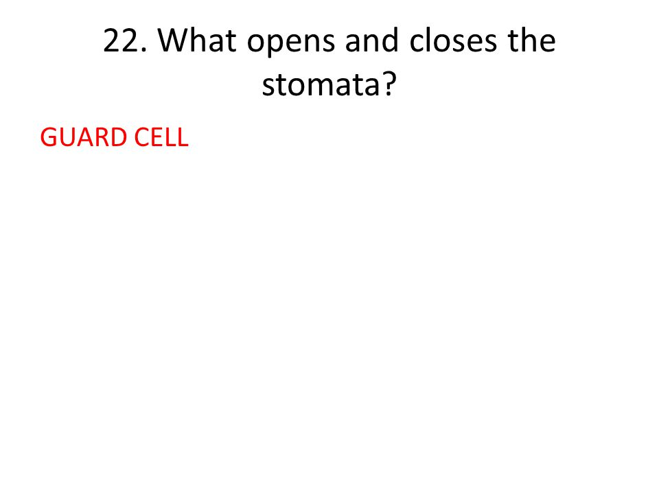 22. What opens and closes the stomata GUARD CELL