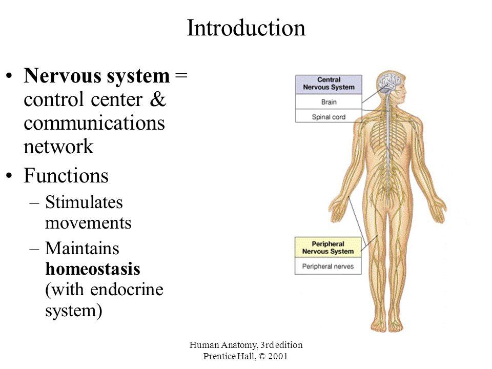 Dorable Anatomy And Physiology Jenkins 3rd Edition Pdf Viñeta ...