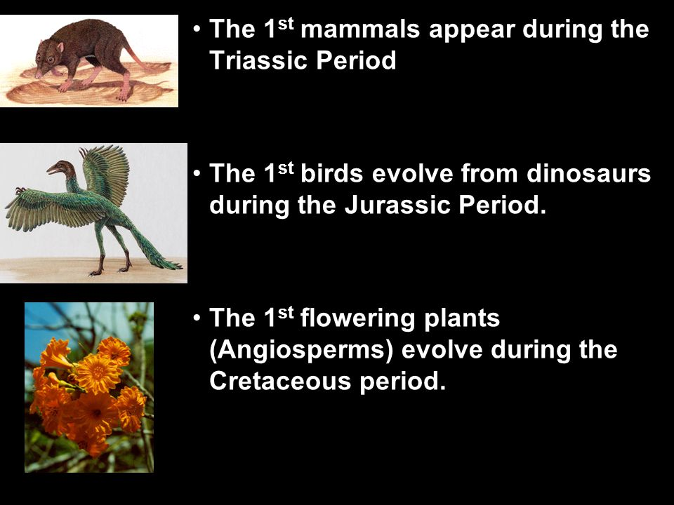 the life forms that were present during the jurassic period Many major events took place during this period and were present throughout the jurassic period till the end of the cenozoic era life forms and.
