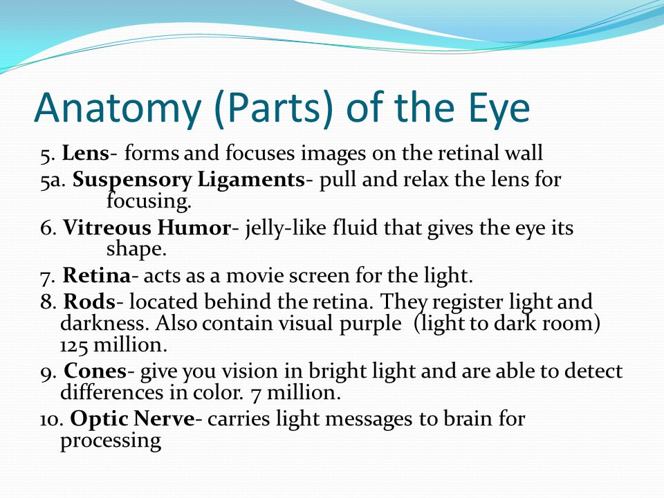 Anatomy (Parts) of the Eye 5. Lens- forms and focuses images on the retinal wall 5a.