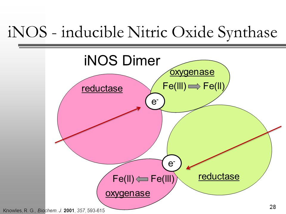 iNOS Dimer reductase oxygenase reductase e-e- Fe(lll)Fe(ll) 28 Fe(ll)Fe(lll) e-e- iNOS - inducible Nitric Oxide Synthase Knowles, R.