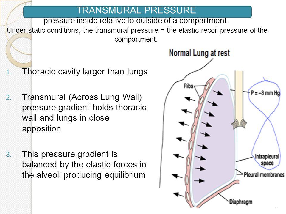 SlideJpg   Systems Respiratory