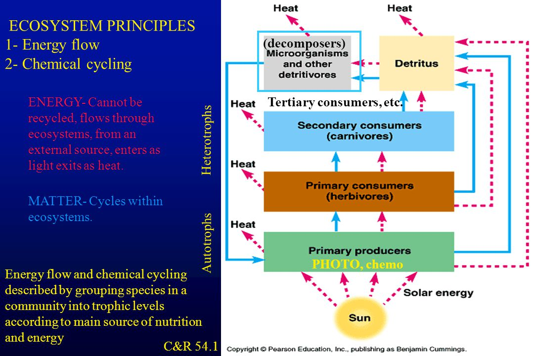 a summary of the cycle of chemicals through the ecosystem Members of ecosystems the carbon-oxygen cycle describes how the ecosystem uses these what process changes light ener gy into chemical energy (energy.