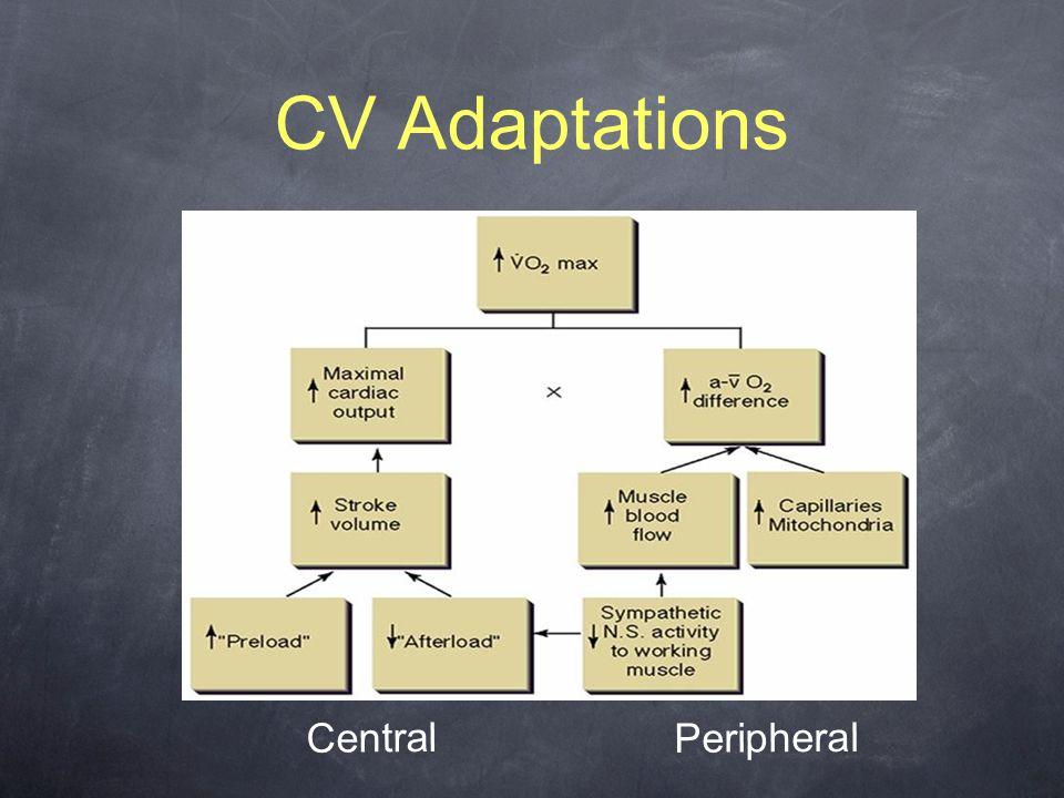 CV Adaptations Central Peripheral