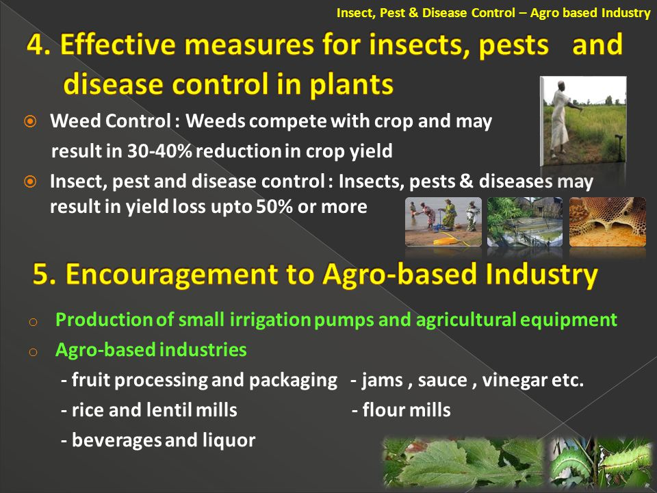  Weed Control : Weeds compete with crop and may result in 30-40% reduction in crop yield  Insect, pest and disease control : Insects, pests & diseases may result in yield loss upto 50% or more Insect, Pest & Disease Control – Agro based Industry o Production of small irrigation pumps and agricultural equipment o Agro-based industries - fruit processing and packaging - jams, sauce, vinegar etc.