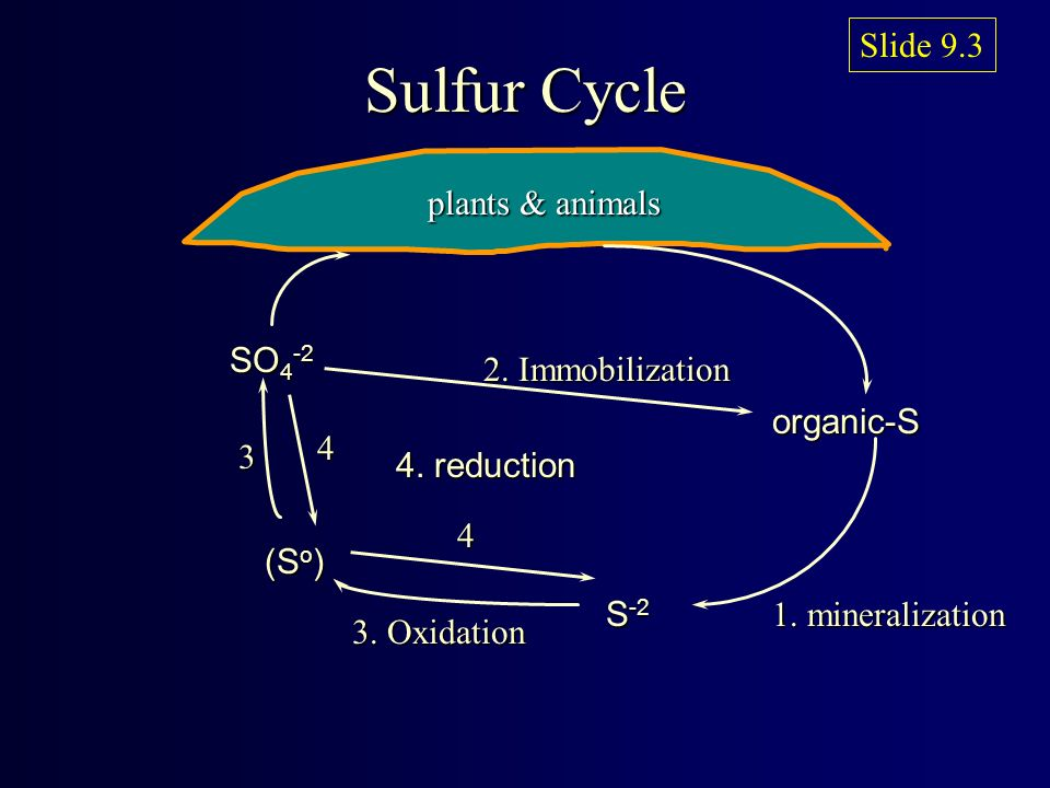 factors affecting sulfur mineralization Investigation and correlation of soil biotic and abiotic factors affecting agricultural magnesium, sulfur, calcium and mineralization process is due to.