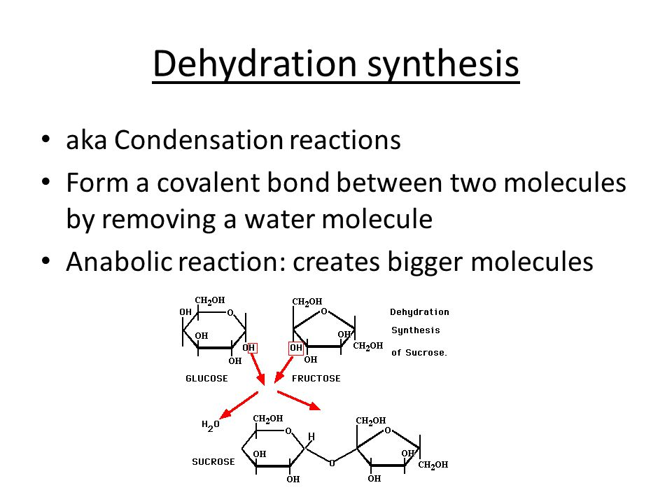 dehydration systhesis