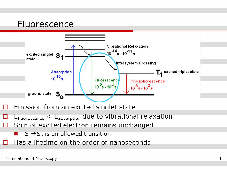 Foundations of Microscopy4 Fluorescence  Emission from an excited singlet state  E fluorescence < E absorption due to vibrational relaxation  Spin of excited electron remains unchanged S 1  S 0 is an allowed transition  Has a lifetime on the order of nanoseconds