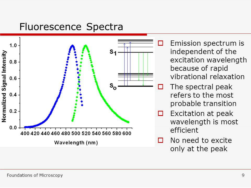 Foundations of Microscopy9 Fluorescence Spectra  Emission spectrum is independent of the excitation wavelength because of rapid vibrational relaxation  The spectral peak refers to the most probable transition  Excitation at peak wavelength is most efficient  No need to excite only at the peak