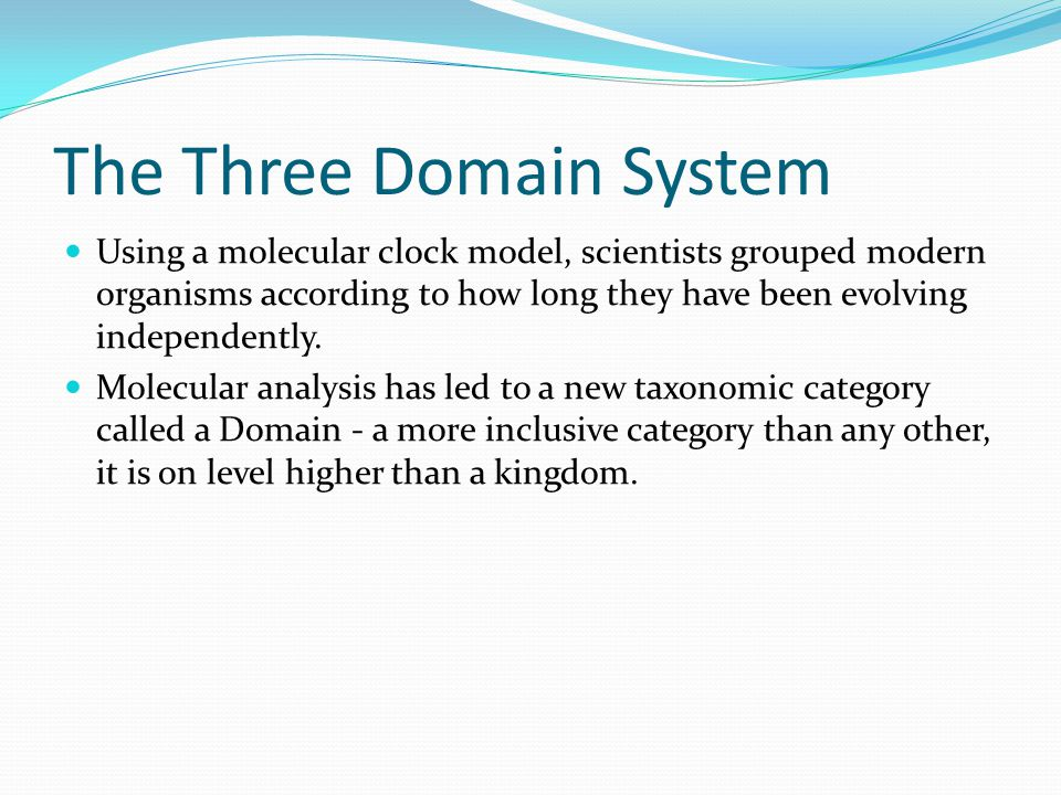The Three Domain System Using a molecular clock model, scientists grouped modern organisms according to how long they have been evolving independently.