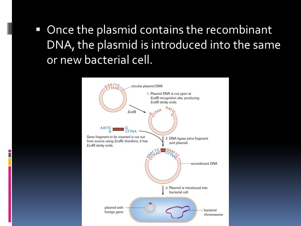  Once the plasmid contains the recombinant DNA, the plasmid is introduced into the same or new bacterial cell.