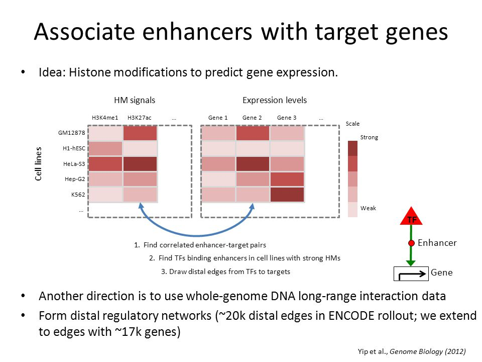 Histone Modifications Insights into Their Influence on