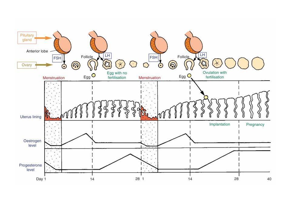 fsh hormone structure