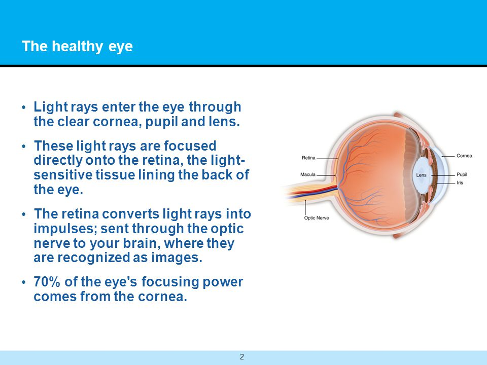 2 The healthy eye Light rays enter the eye through the clear cornea, pupil and lens.