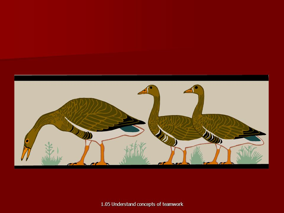 Lessons from Geese Fact 4 The geese flying in formation honk to encourage those up front to keep up the speed. The geese flying in formation honk to e