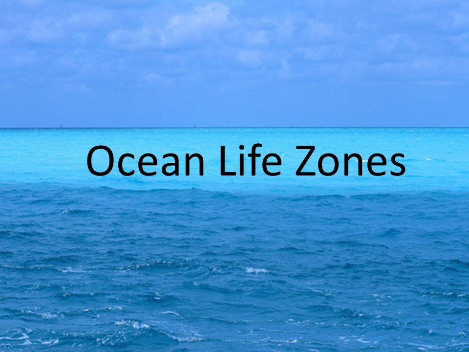 Ocean Life Zones