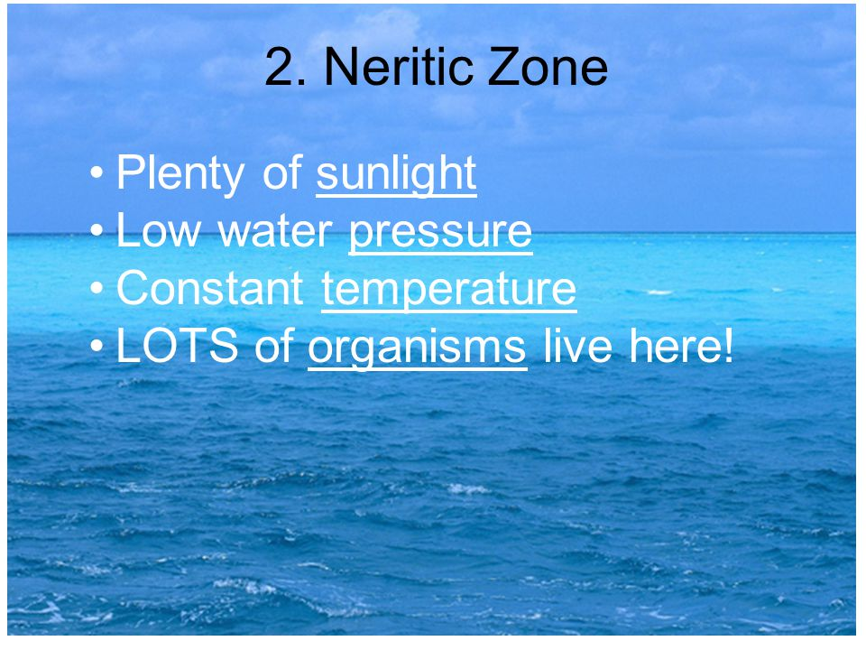 2. Neritic Zone Plenty of sunlight Low water pressure Constant temperature LOTS of organisms live here!
