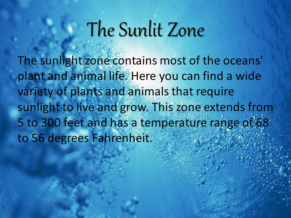The Sunlit Zone The sunlight zone contains most of the oceans plant and animal life.