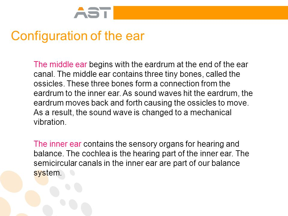 The middle ear begins with the eardrum at the end of the ear canal.