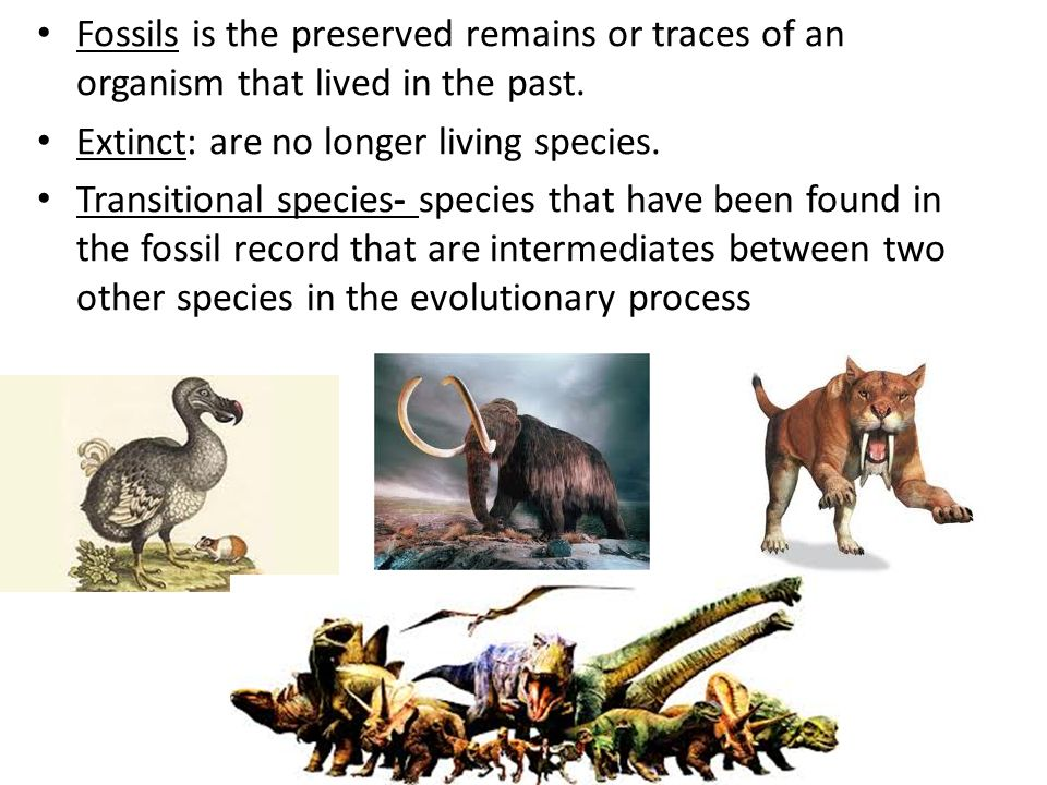 Evidence supporting evolution Fossil record – transition species Anatomical record – homologous & vestigial structures – embryology & development Molecular record – protein & DNA sequence Artificial selection – human-caused evolution