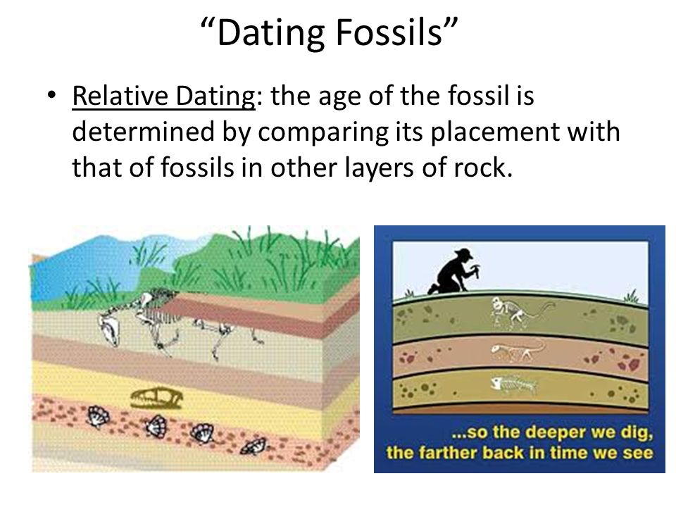 Fossil record Layers of sedimentary rock contain fossils – new layers cover older ones, creating a record over time – fossils within layers show that a succession of organisms have populated Earth throughout a long period of time