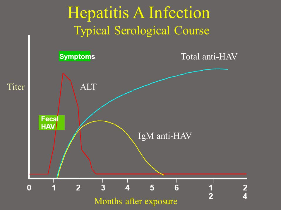 Fecal HAV Symptoms Hepatitis A Infection Total anti-HAV TiterALT IgM anti-HAV Months after exposure Typical Serological Course