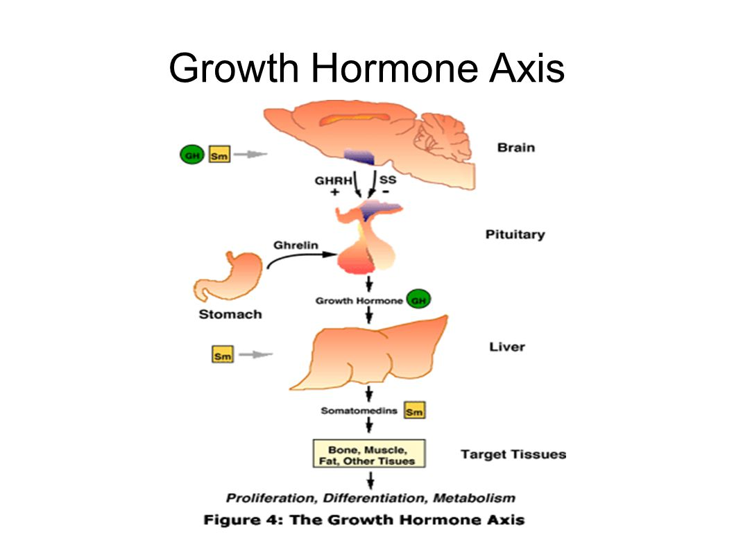 Growth Hormone Axis