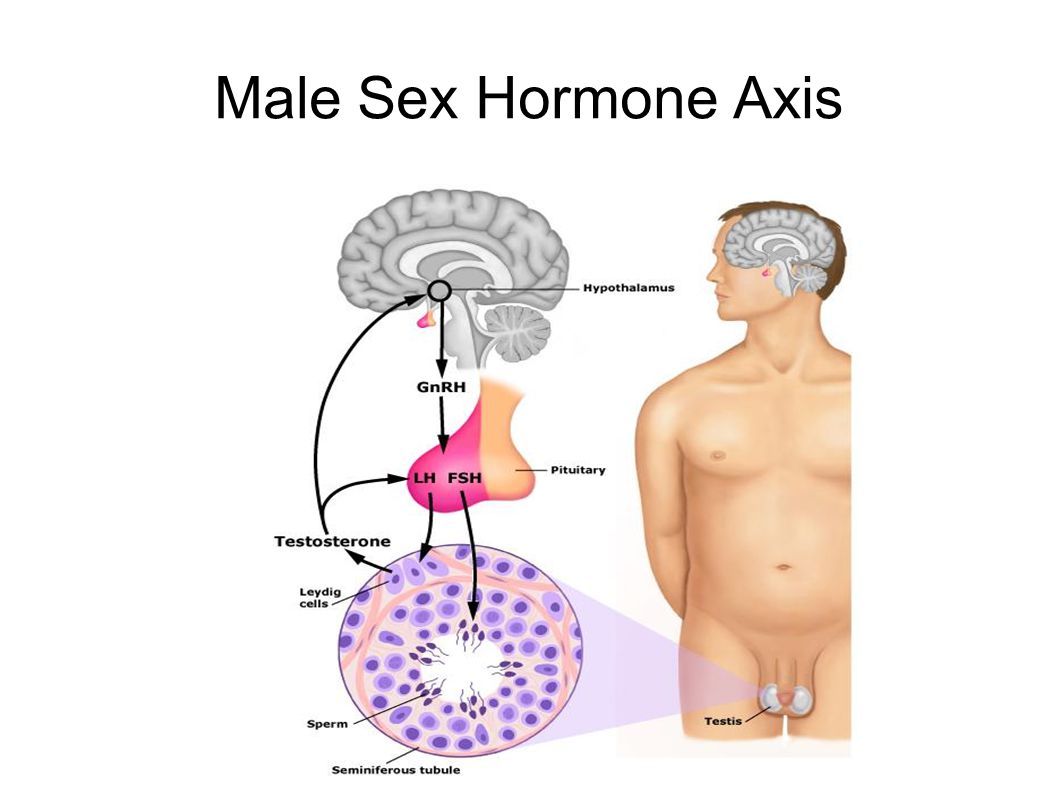 Male Sex Hormone Axis