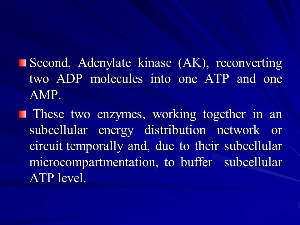 Second, Adenylate kinase (AK), reconverting two ADP molecules into one ATP and one AMP.