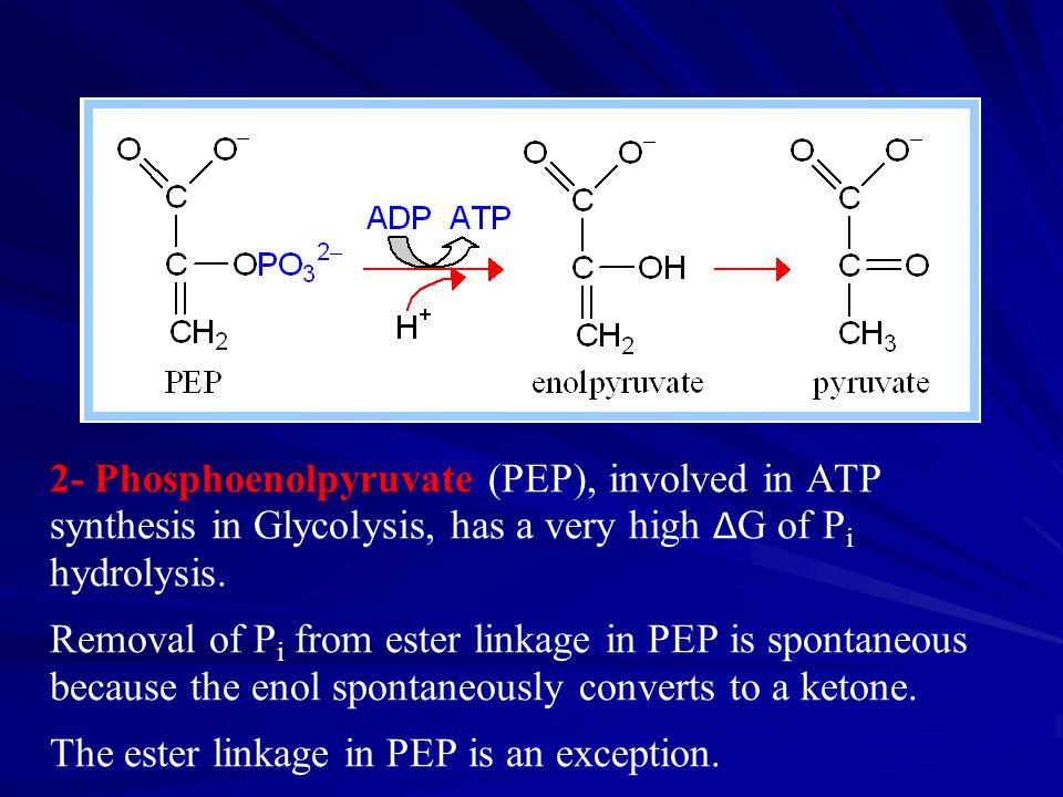 2- Phosphoenolpyruvate (PEP), involved in ATP synthesis in Glycolysis, has a very high Δ G of P i hydrolysis.