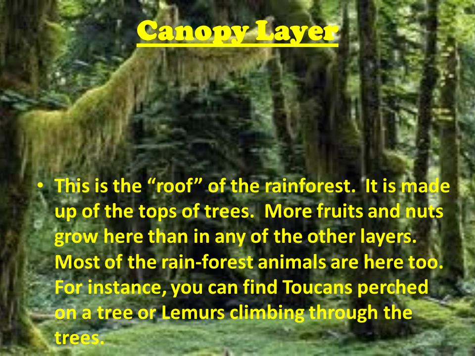 4 Canopy ...  sc 1 st  SlidePlayer & Rainforest Animals Emergent Layer This layer is made up of a few ...