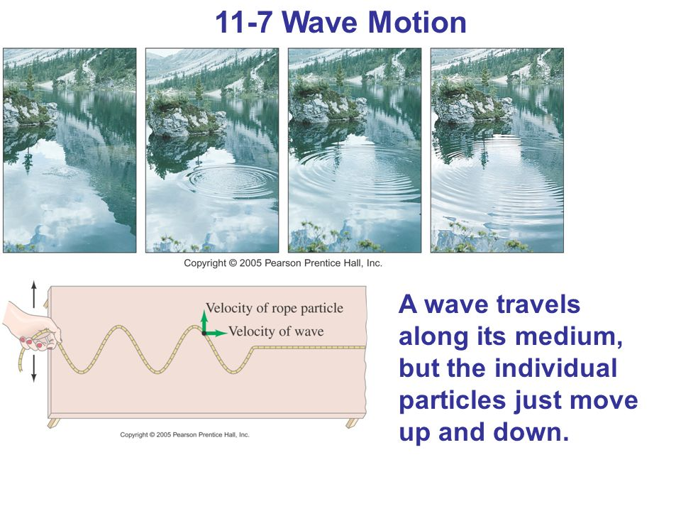 11-7 Wave Motion A wave travels along its medium, but the individual particles just move up and down.