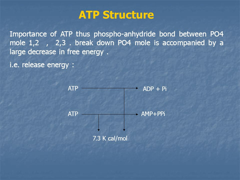 ATP Structure Importance of ATP thus phospho-anhydride bond between PO4 mole 1,2, 2,3.