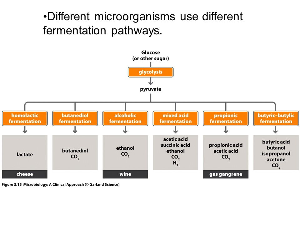 Different microorganisms use different fermentation pathways.