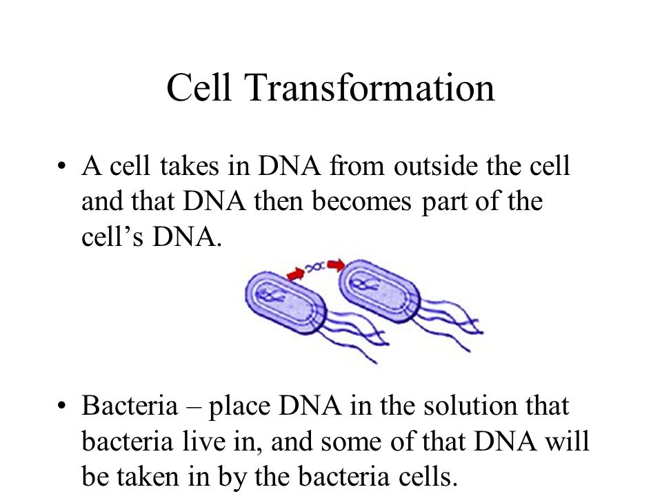 Cell Transformation A cell takes in DNA from outside the cell and that DNA then becomes part of the cell's DNA.