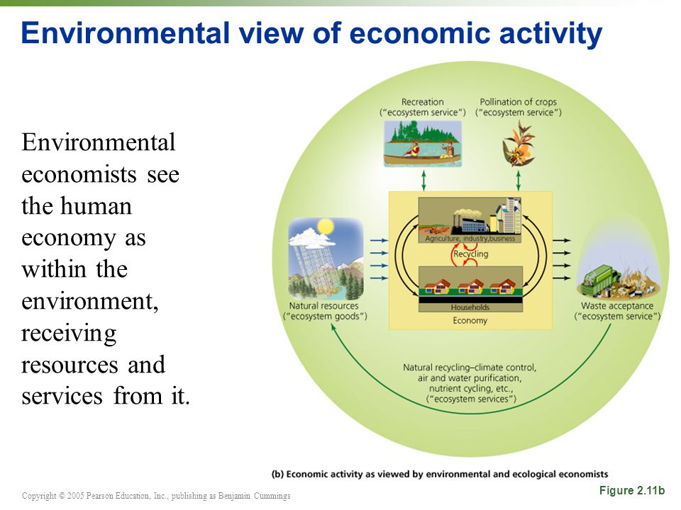 Copyright © 2005 Pearson Education, Inc., publishing as Benjamin Cummings Environmental view of economic activity Environmental economists see the human economy as within the environment, receiving resources and services from it.