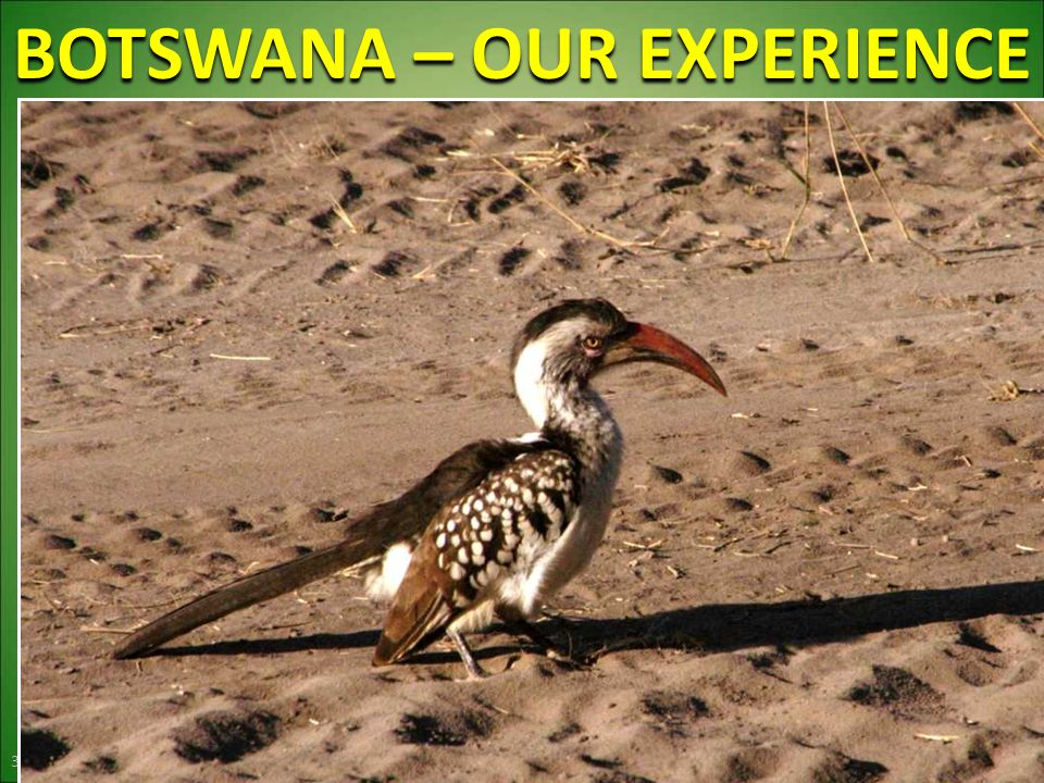 BOTSWANA – OUR EXPERIENCE 39
