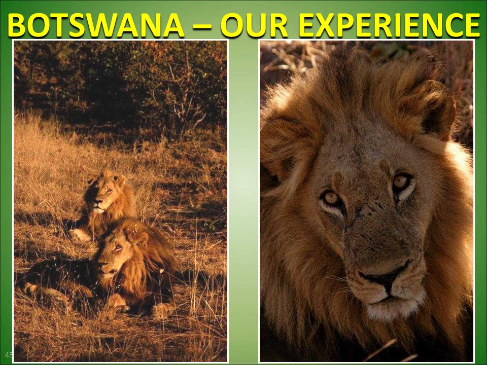 BOTSWANA – OUR EXPERIENCE 43