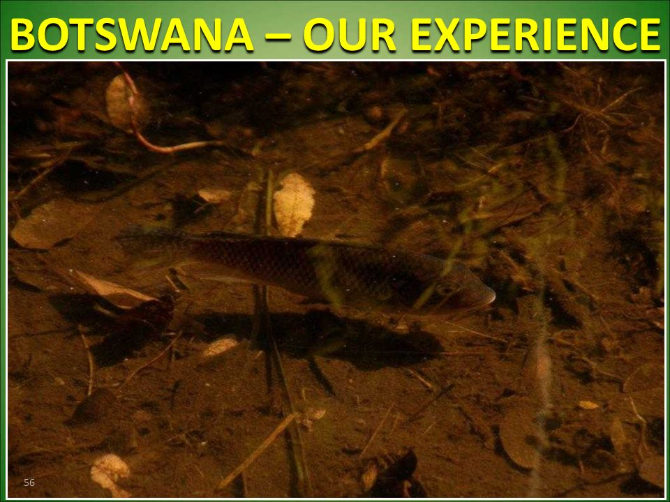 BOTSWANA – OUR EXPERIENCE 56