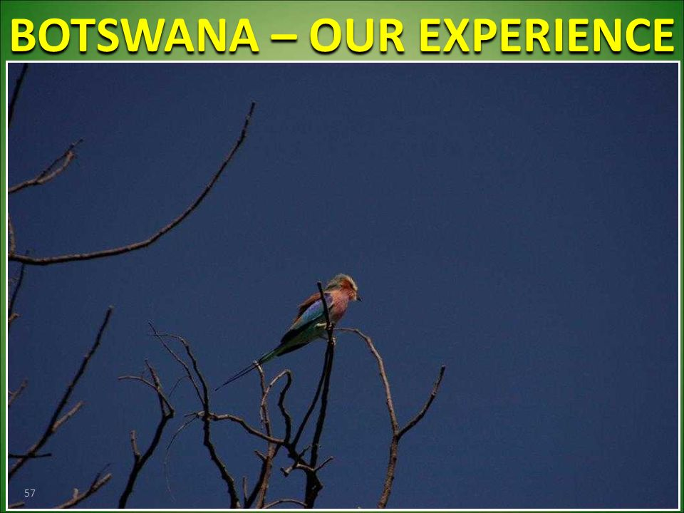 BOTSWANA – OUR EXPERIENCE 57